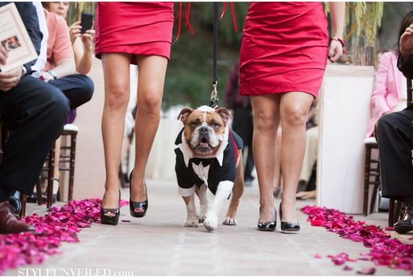 cachorro-terno-gravata